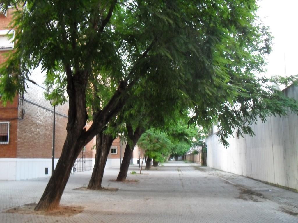 Calle Tarfia Peatonal